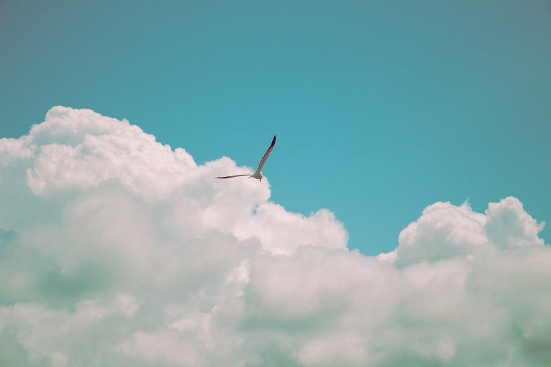 自由に大空を飛ぶ鳥