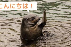 浦上歩 オットセイがこんにちは!と手を上げる
