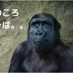 昔の自分を思い出すチンパンジー