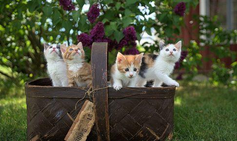 4匹の猫が1つのかごに入っている